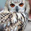 Roofvogelshow Camping Het Grote Bos (Nico)
